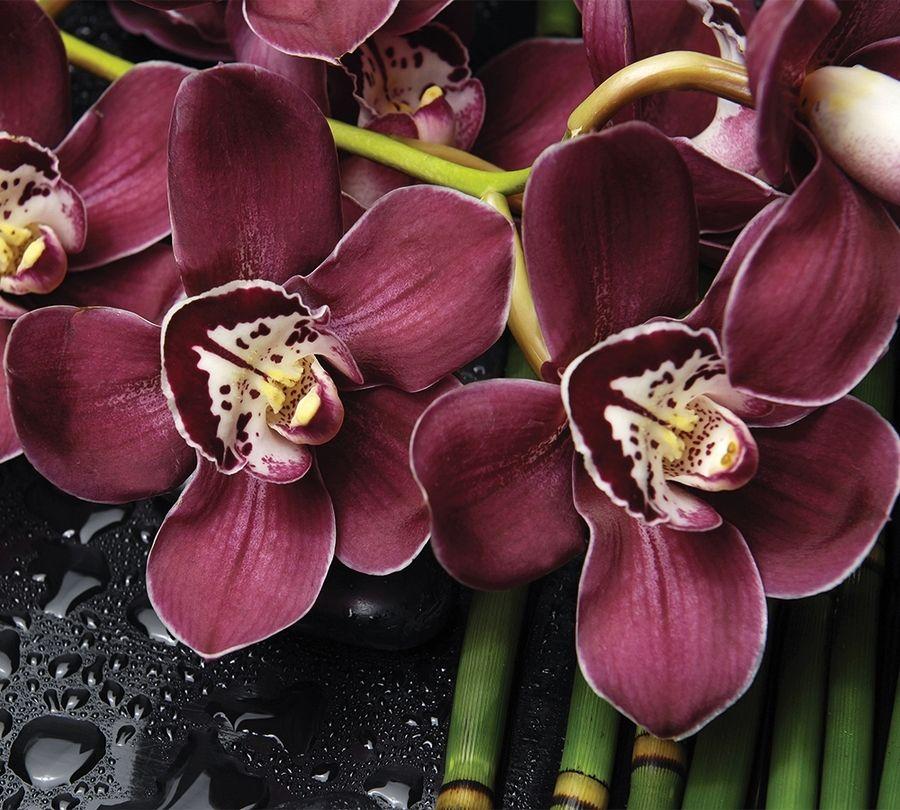 Фотошторы Орхидеи и капли воды<br>kit: None; gender: None;