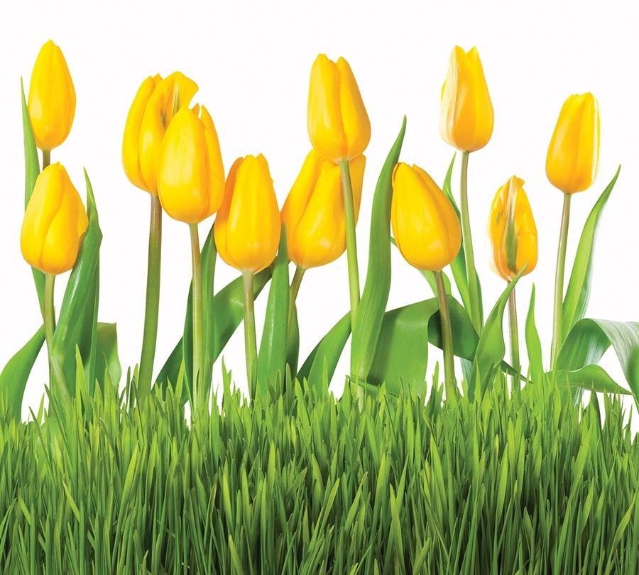 Фотошторы Желтые тюльпаны<br>kit: None; gender: None;