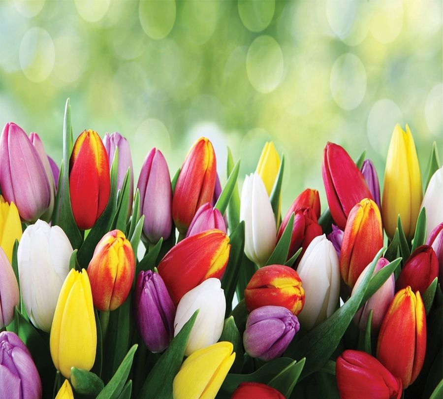 Фотошторы Разноцветные тюльпаны<br>kit: None; gender: None;
