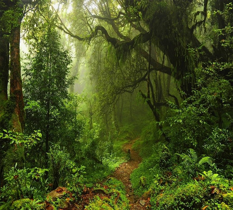 3D фотообои Фотошторы «Тропический лес» вид 1