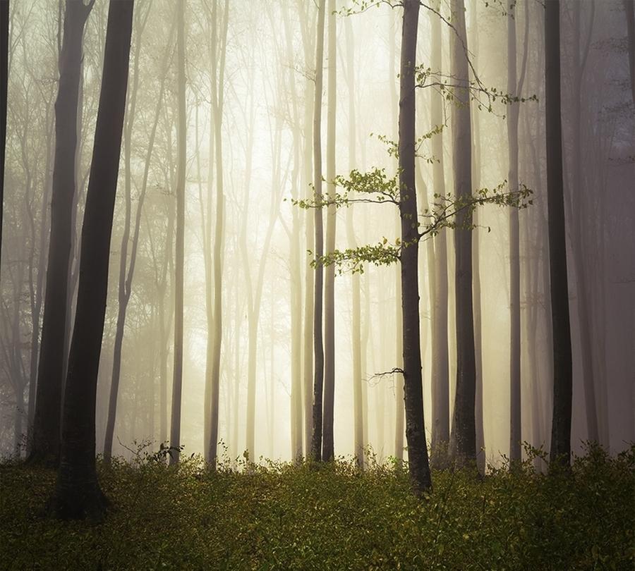 3D фотообои Фотошторы «Туман в мистическом лесу» вид 1