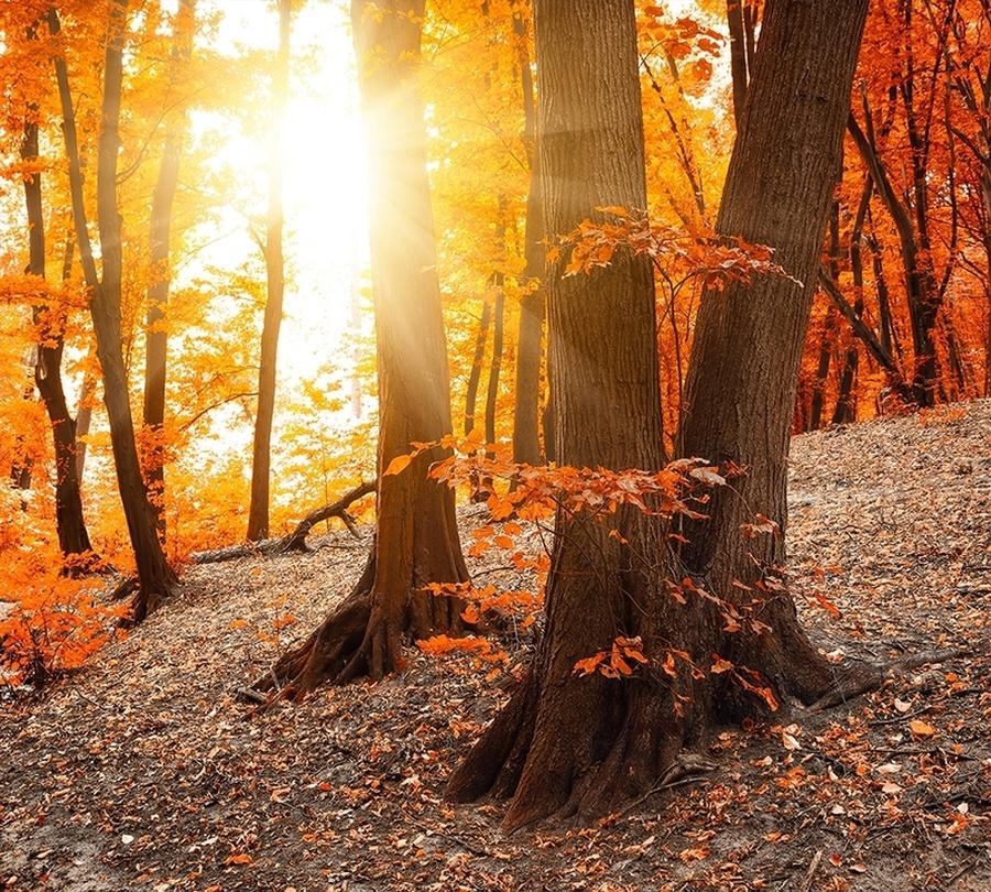 Фотошторы Осенний лес<br>kit: None; gender: None;