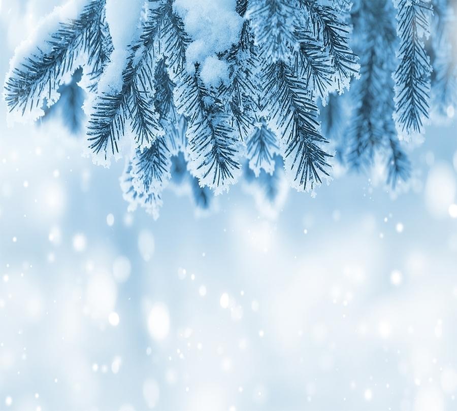 Фотошторы Ветка ели в снегу<br>kit: None; gender: None;