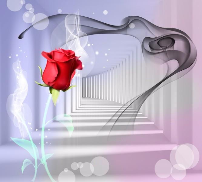 Фотошторы Красная роза в тоннеле<br>kit: None; gender: None;