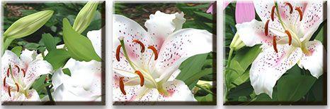 Модульная картина Белая лилия с цветком и бутоном<br>kit: None; gender: None;