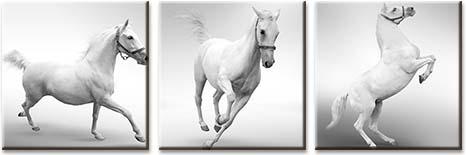 Модульная картина Белые лошади на серо-белом фоне<br>kit: None; gender: None;