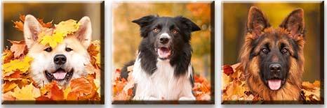 Модульная картина Собаки в листьях<br>kit: None; gender: None;