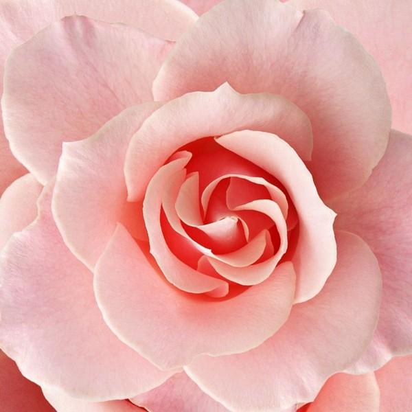 3D Подушка «Розовый бутон» вид 1