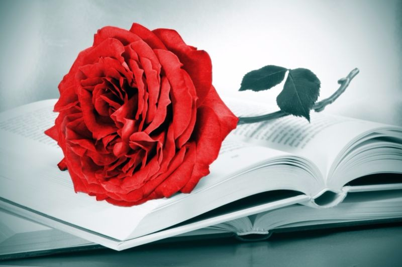 3D Фотообои «Красная роза на книге»<br>kit: None; gender: None;