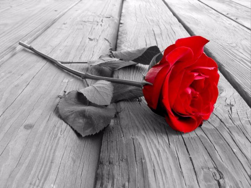 3D Фотообои «Черно белое фото с красной розой»<br>kit: None; gender: None;