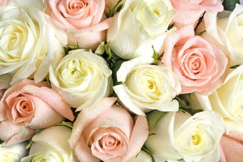 """Фотообои """"«Салатово-розовые розы»"""""""