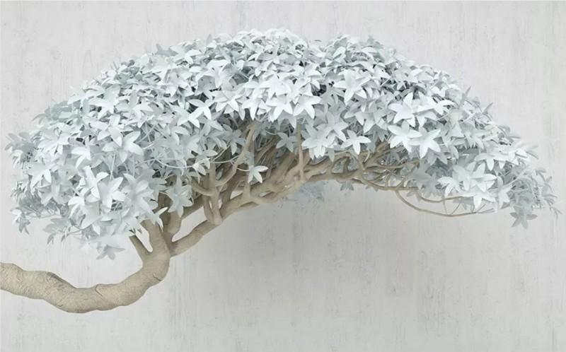 3D фотообои «Изящный бонсай» вид 1