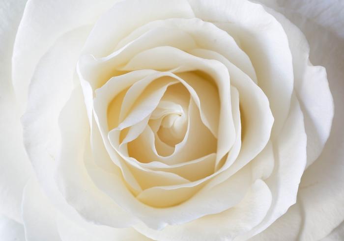 3D фотообои «Белая нежность» вид 1