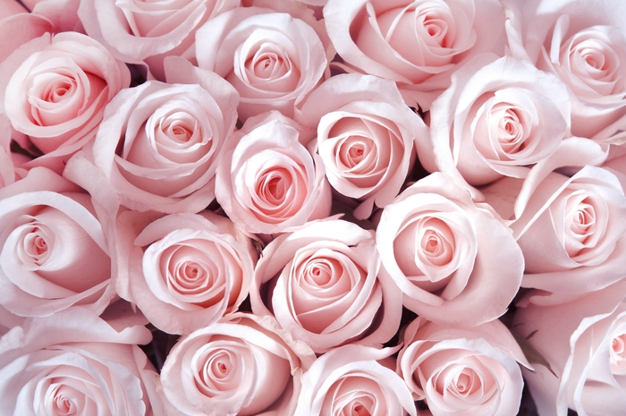 3D фотообои «Благоухающий букет нежных роз» вид 1