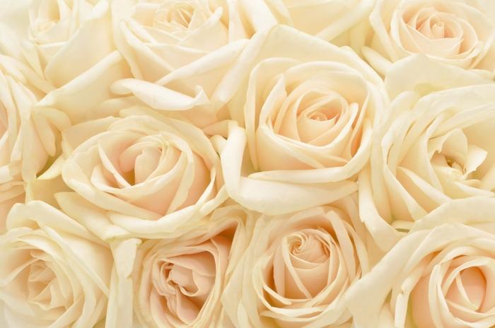 3D фотообои «Ковер из бежевых роз» вид 1
