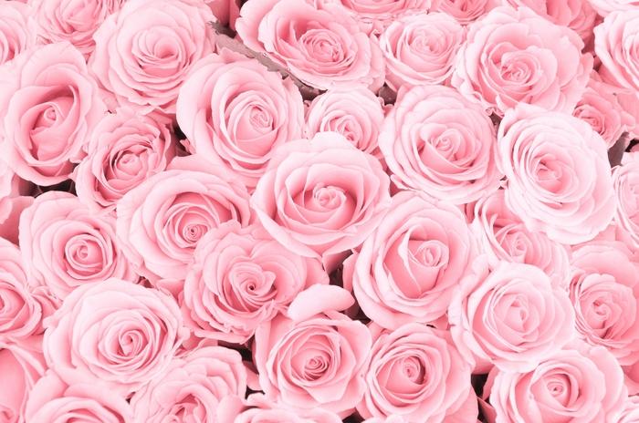 3D Фотообои «Ковер из нежно-розовых роз»<br>kit: None; gender: None;