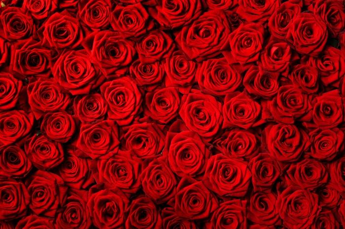 3D фотообои 3D Фотообои «Миллион алых роз» вид 1