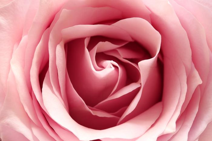 3D фотообои «Нежно-розовый бутон» вид 1