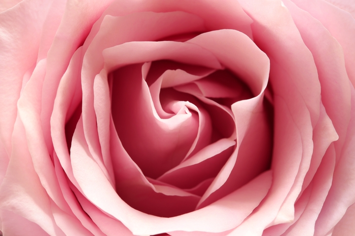 «Нежно-розовый бутон» вид 1