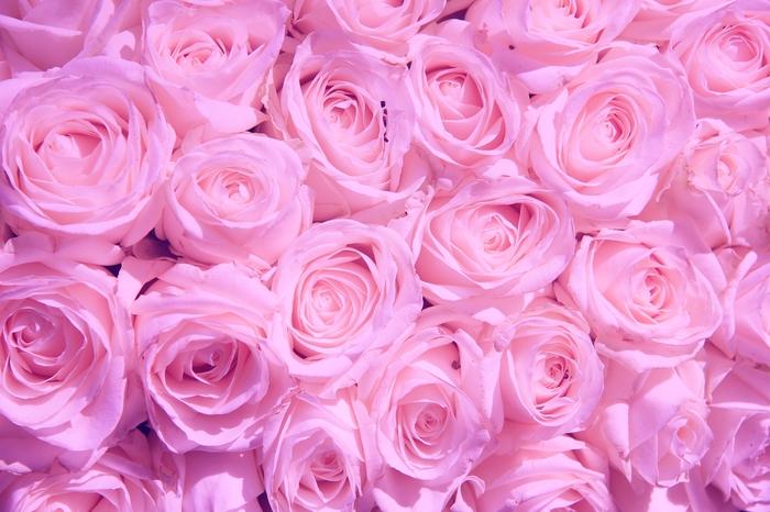 3D Фотообои «Нежно-сиреневые розы»<br>kit: None; gender: None;