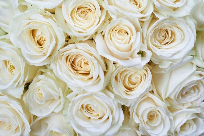 3D Фотообои «Нежные кремовые розы»<br>kit: None; gender: None;