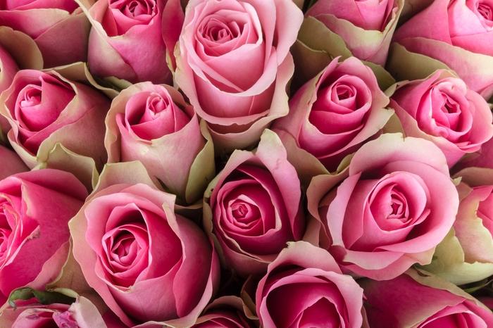 """Фотообои """"«Обилие розовых роз»"""""""