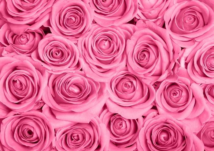 3D Фотообои «Розы в розовых тонах»<br>kit: None; gender: None;
