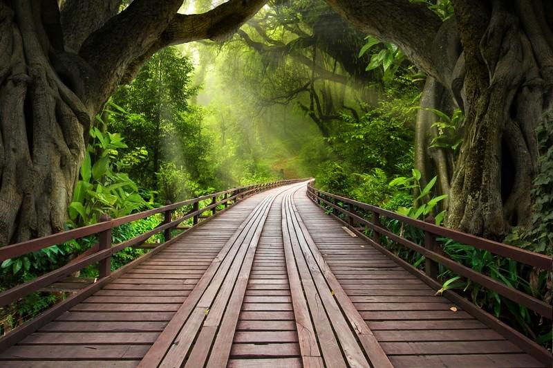"""Фотообои """"«Мост в тропическом лесу»"""""""