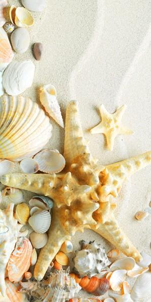 3D Фотообои «Морская звезда на песке»<br>kit: None; gender: None;