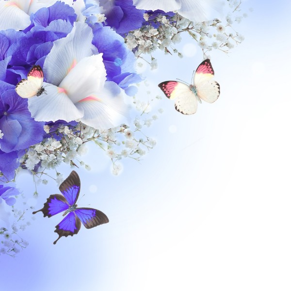 3D Фотообои «Бабочки под нежными цветами»<br>kit: None; gender: None;
