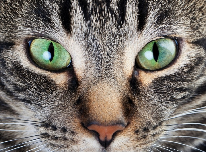 3D Фотообои «Взгляд кошки»<br>kit: None; gender: None;