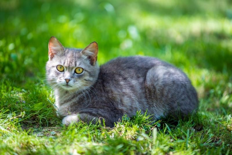 3D Фотообои «Котик на зеленом лугу»<br>kit: None; gender: None;