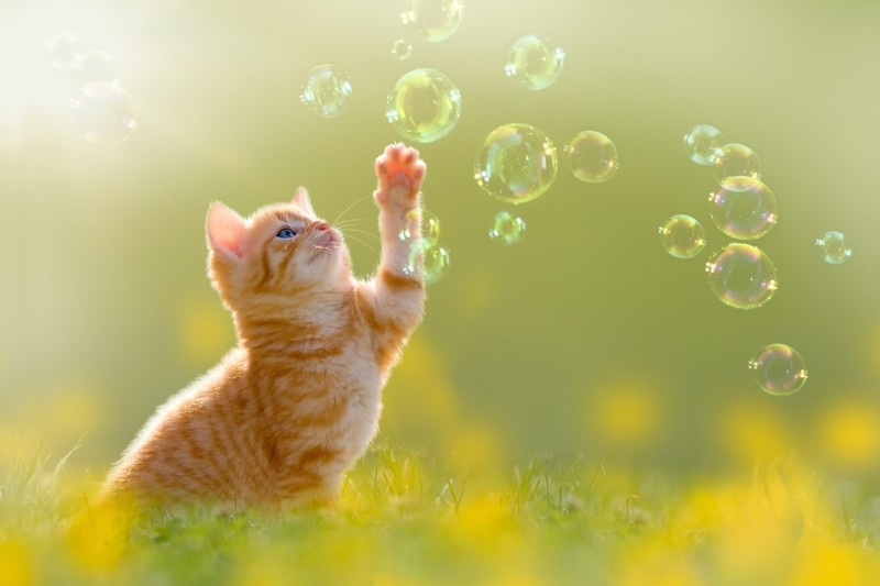 """Фотообои """"«Рыжий кот с мыльными пузырями»"""""""