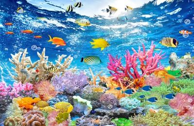3D Ковер «Яркие краски кораллового рифа»