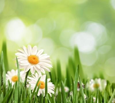 Фотошторы «Ромашки в траве»