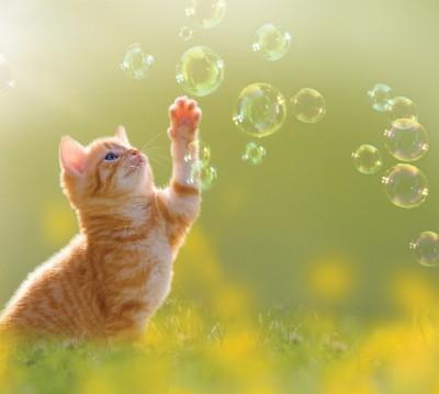 Фотошторы «Рыжий кот с мыльными пузырями»