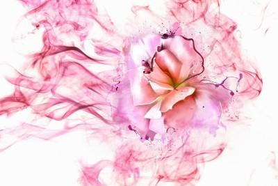 3D Фотообои «Перламутровая роза в розовой дымке»