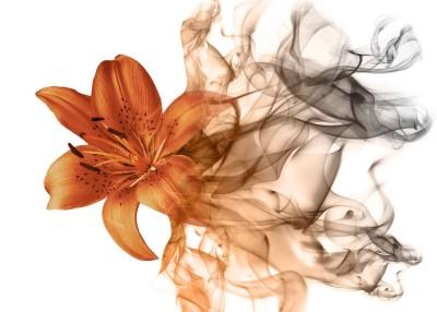 3D Фотообои «Огненная лилия»