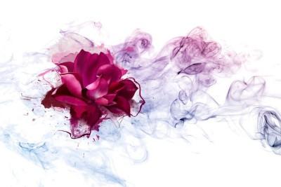 3D Фотообои «Роза в сиреневом тумане»