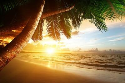 3D Фотообои  «Закат под пальмами»