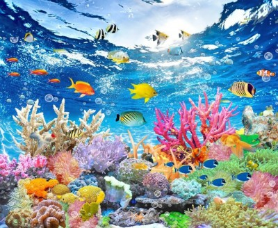 3D Фотообои «Яркие краски кораллового рифа»