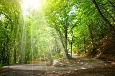 3D Фотообои «Дорога в солнечном лесу»