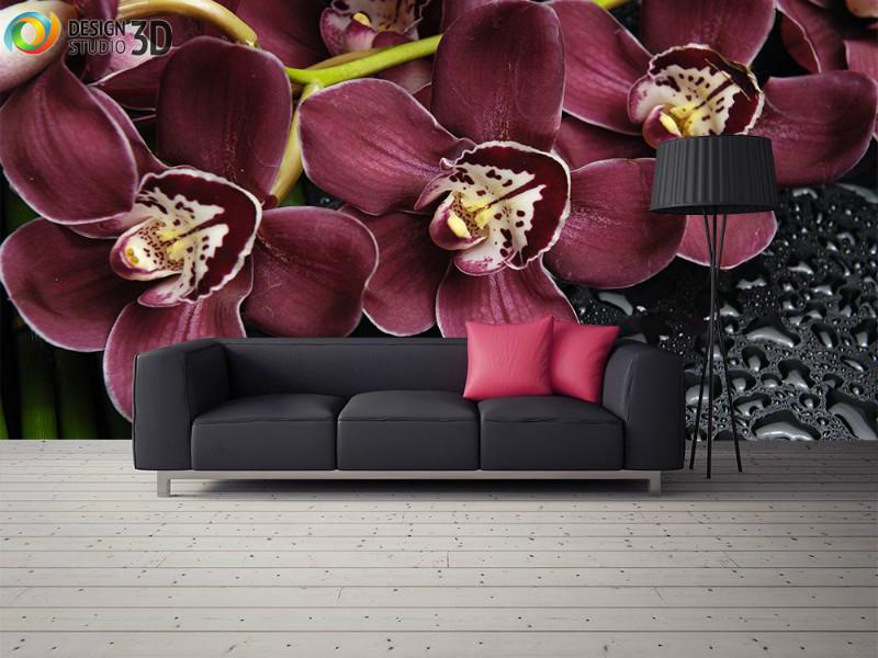 orhidei-i-kapli-vody