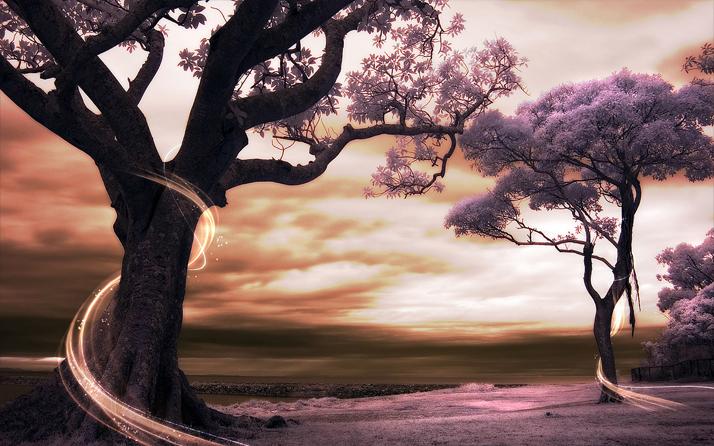 """3D Фотообои  """"Фиолетовые деревья"""""""