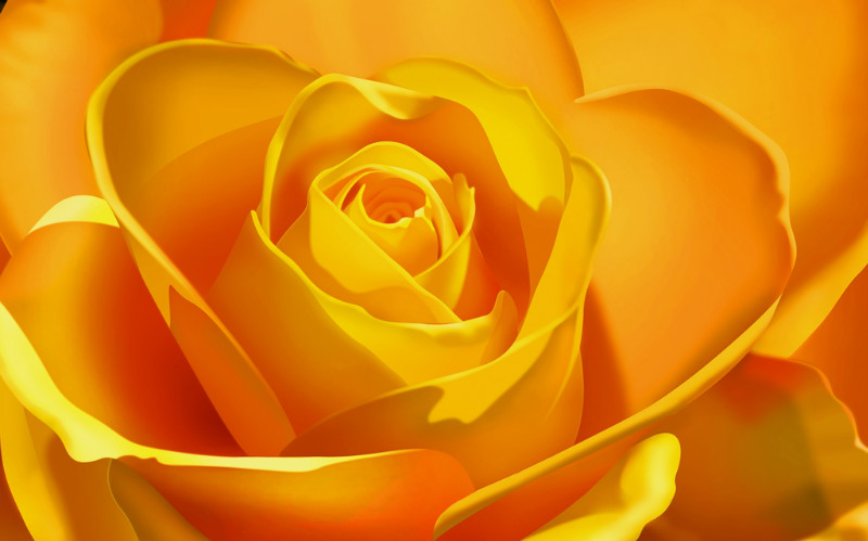 Розы на фотообоях