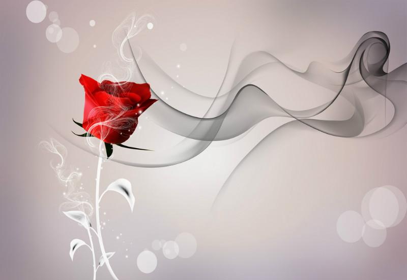 """3D Фотообои """"Красная роза на сером фоне"""""""