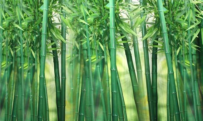 "3D Фотообои  ""Объемный бамбук"""