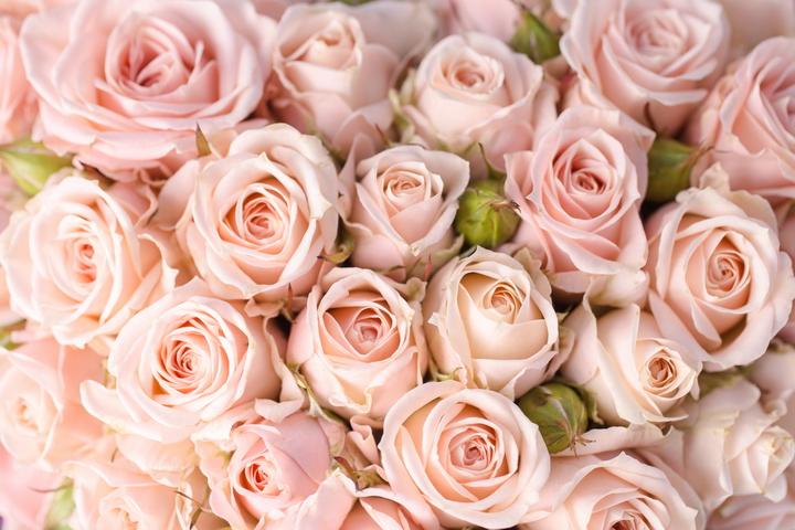 3D фотообои «Кремовые розы» вид 1