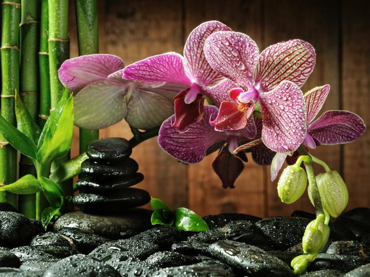 3D фотообои 3D Фотообои  «Орхидея на камне»  вид 1