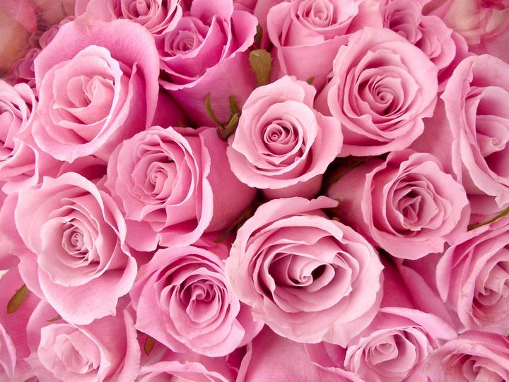 """3D Фотообои """"Розовые розы"""""""